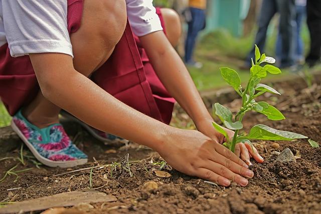 Planting 1898946 640