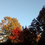 langara-leaves